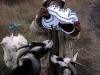 Being attacked by goats in the Ukraine. Note that no animals were hurt during the process.